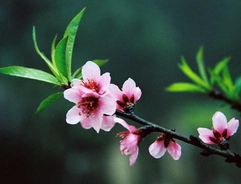 Hoa cỏ mùa xuân. Ảnh: st.