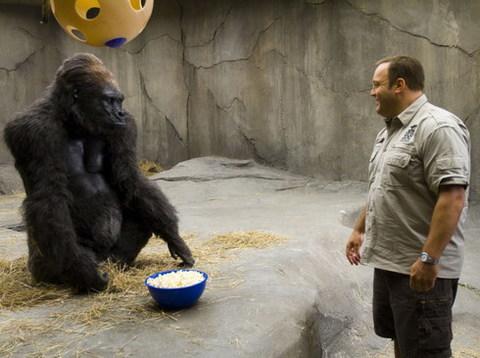 Một cảnh vui nhộn trong 'Zookeeper'. Ảnh: Sony.