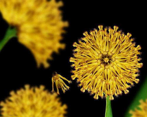 h1-jpg-1353663885-1353664771_500x0.jpg Bí mật được hé lộ sau bộ ảnh đẹp từ những bông hoa nhiều màu sắc