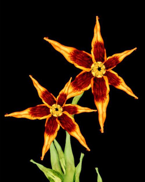 h11-jpg-1353663885-1353664772_500x0.jpg Bí mật được hé lộ sau bộ ảnh đẹp từ những bông hoa nhiều màu sắc