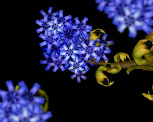 h2-jpg-1353663885-1353664771_500x0.jpg Bí mật được hé lộ sau bộ ảnh đẹp từ những bông hoa nhiều màu sắc