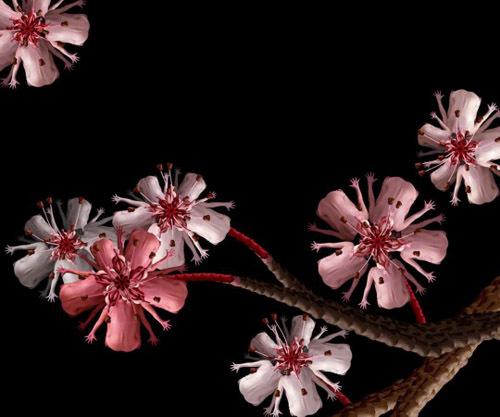 h5-jpg-1353664771_500x0.jpg Bí mật được hé lộ sau bộ ảnh đẹp từ những bông hoa nhiều màu sắc