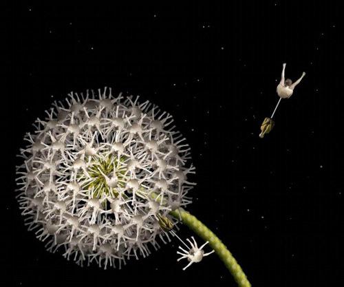 h6-jpg-1353664771_500x0.jpg Bí mật được hé lộ sau bộ ảnh đẹp từ những bông hoa nhiều màu sắc