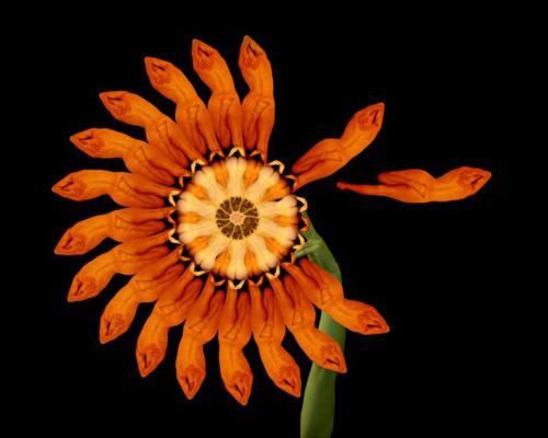 h7-jpg-1353664772_500x0.jpg Bí mật được hé lộ sau bộ ảnh đẹp từ những bông hoa nhiều màu sắc