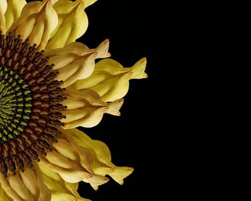 h8-jpg-1353664772_500x0.jpg Bí mật được hé lộ sau bộ ảnh đẹp từ những bông hoa nhiều màu sắc