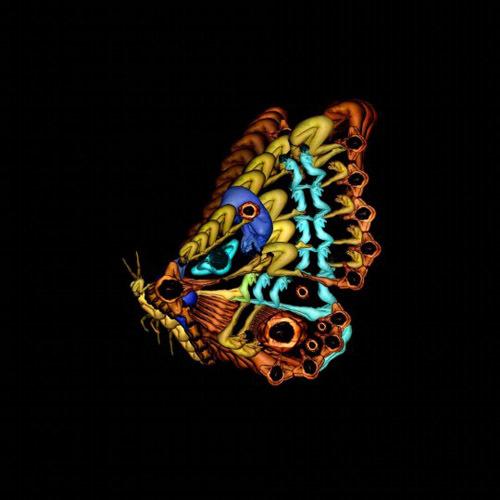 h9-jpg-1353664772_500x0.jpg Bí mật được hé lộ sau bộ ảnh đẹp từ những bông hoa nhiều màu sắc