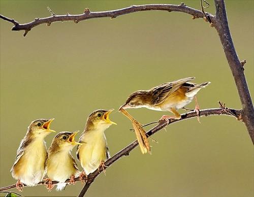 Chụp ảnh loài chim là niềm đam mê của Octavianus Darmawan, nhiếp ảnh gia người Indonesia.