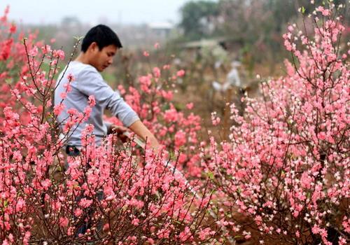 Đất nước đang bước vào một mùa xuân mới. Ảnh: Phương Phương.