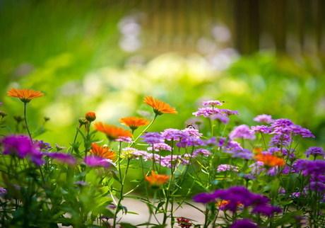 Những sắc màu rực rỡ của hoa dại làm nên khung cảnh tháng tư. Ảnh: st.