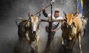 Cuộc thi Ảnh VnExpress bước vào giai đoạn nước rút
