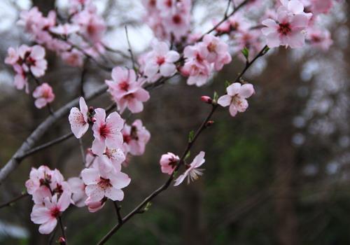 Một mùa xuân mới lại về trên khắp mọi miền đất nước. Ảnh: Nick M.