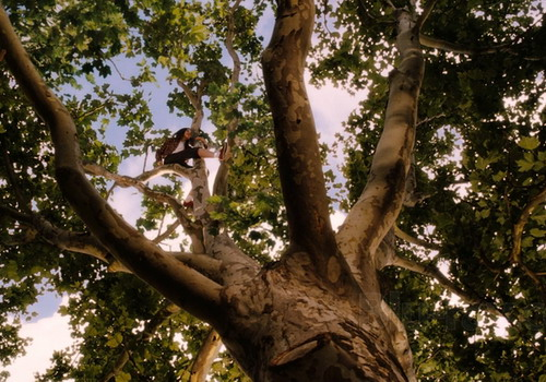 Hình ảnh cây sung dâu trong phim.