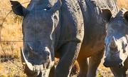 11 tác phẩm vào chung kết cuộc thi phim ngắn bảo vệ động vật