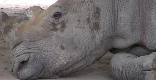 Chùm phim ngắn về động vật hoang dã gây sửng sốt