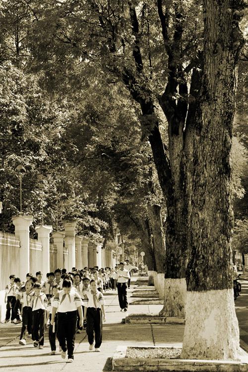 Những bức ảnh chụp Sài Gòn xưa rợp bóng cây xanh