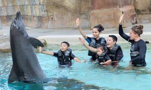 Hoàng Bách cùng vợ con du lịch Singapore đầu năm