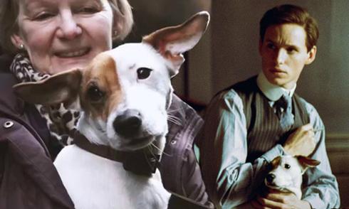 Chú chó cưng Pixie tạo thêm điểm nhấn cho phim 'Cô gái Đan Mạch'