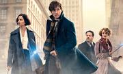 Tặng độc giả vé xem ra mắt 'Fantastic Beasts & Where to Find Them'