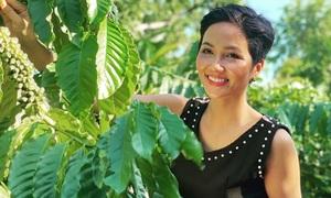 Hoa hậu H'Hen Nie và câu chuyện trở thành Đại sứ cà phê