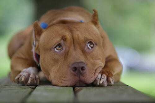 Sayuri - cô chó nổi tiếng vì đóng phim cùng Brad Pitt - ảnh 2