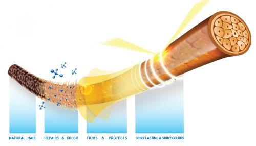 Những thành phần nuôi dưỡng mái tóc bồng bềnh, bóng khỏe - 2
