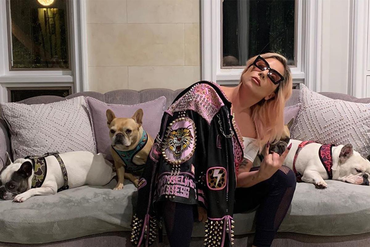 Lady Gaga đăng hình ảnh tự cách ly tại nhà riêng cùng đàn chó, cho biết: Tôi xin tư vấn từ nhiều bác sĩ và nhà khoa học. Tự cách ly là hành động an toàn và tốt bụng bạn có thể làm cho bản thân và những người xung quanh. Tôi ước có thể gặp bố mẹ và bà trong lúc này nhưng điều an toàn nhất là ở nhà, vui chơi với những chú chó của mình. Chúng ta sẽ ổn thôi. Tôi đã nói chuyện với Chúa và ông nói loài người sẽ không sao đâu.