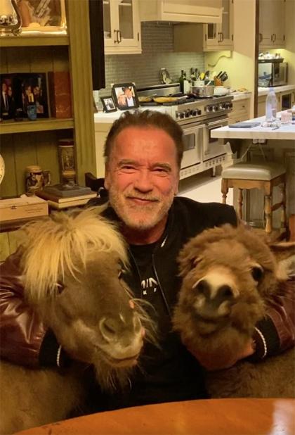 Tài tử Arnold Schwarzenegger ở nhà chơi cùng thú cưng là chú chú ngựa nhỏ. Ông viết: Ở nhà nhiều nhất có thể. Lắng nghe chuyên gia, không hoảng loạn. Chúng ta sẽ cùng nhau vượt qua.